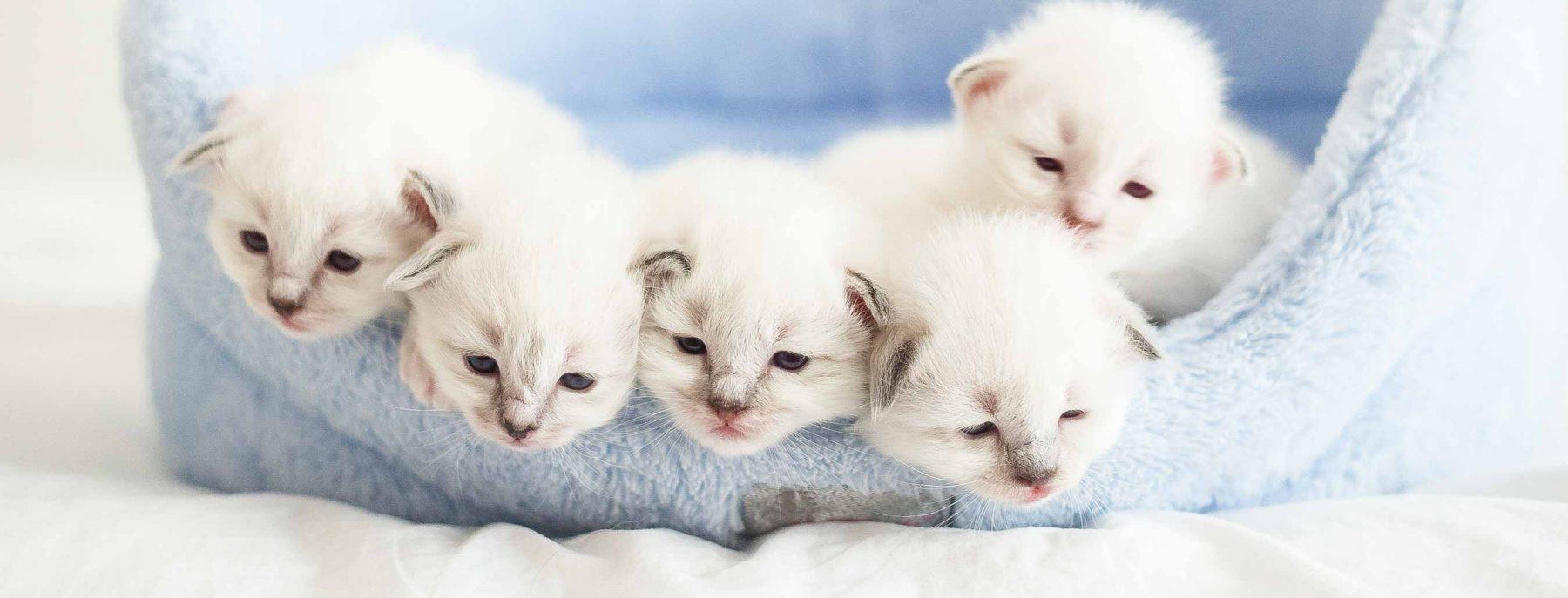 cat-spay-neutering
