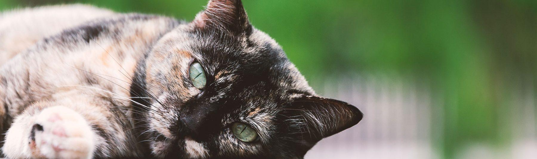 cat-serivces