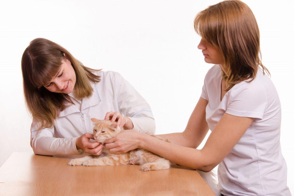 blog-kitten-care