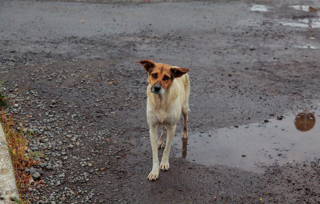 stray-dog-help