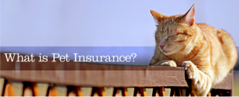 To Insure Your Pet or Not?